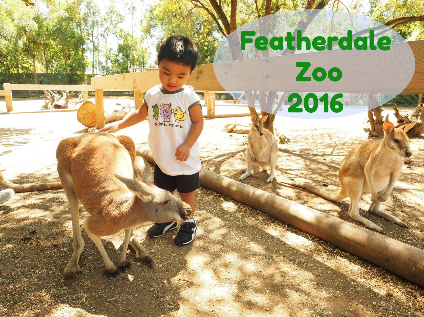 Featherdale Zoo 2016; First Encounter with Kangaroos