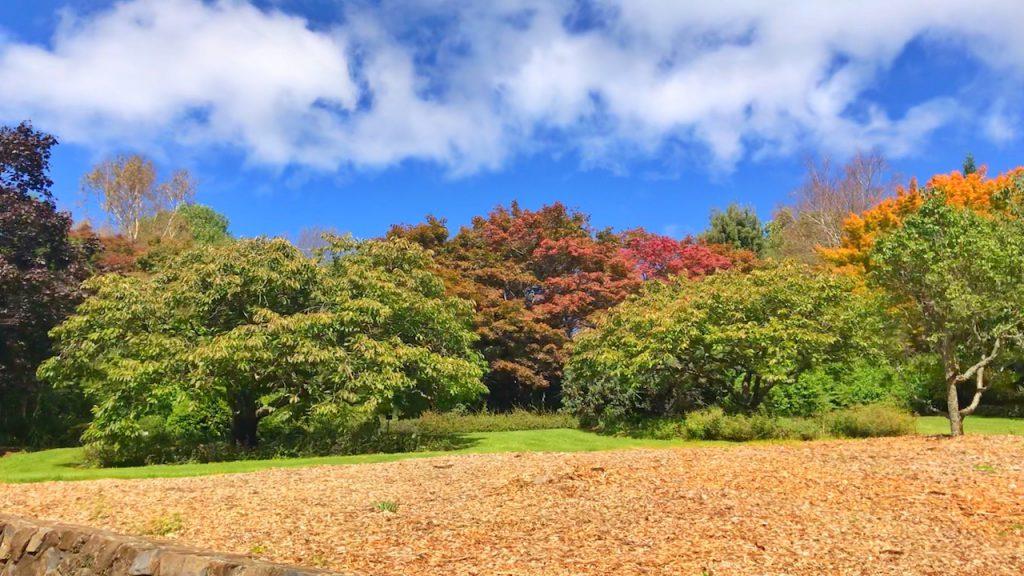 Blue Mountains Botanical Garden NSW, Autumn 2019