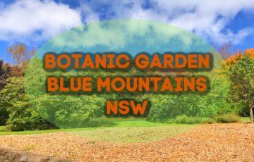 Botanic gardens Blue Mountains