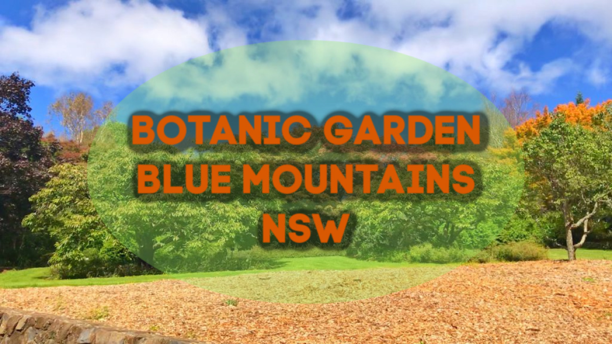 Botanic gardens Blue Mountains